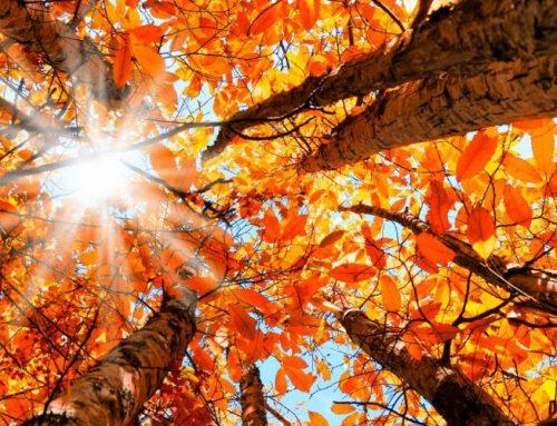 Il disturbo affettivo di stagione : sintomi e rimedi naturali