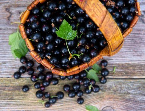 Ribes nero : proprietà e controindicazioni
