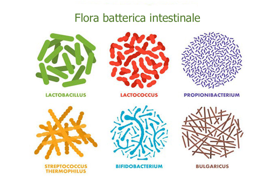 Flora_batterica_intestinale