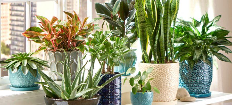 10 tipi di piante che purificano l'aria della nostra casa